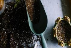 Como cultivar as plantas perenes? Divisão das perenes - Parte #4