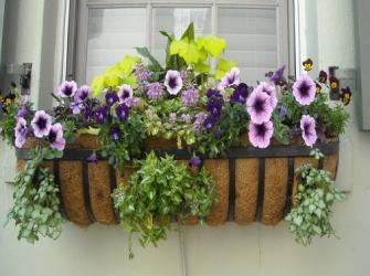 Desenvolvendo um projeto de jardim para suas plantas