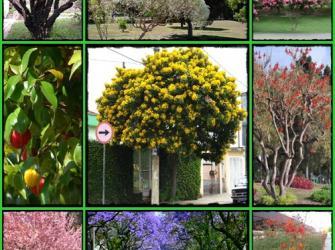 Saiba quais árvores você pode plantar na sua calçada