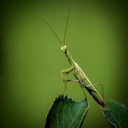 Identificando os insetos