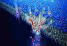Cientistas criam sistema de filtragem de água inspirado no corpo humano