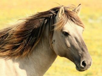 Raças de cavalos mais caras do mundo