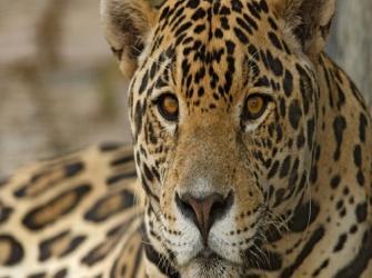 A questão da conservação das espécies