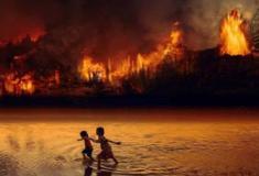 Quando todas as florestas arderem