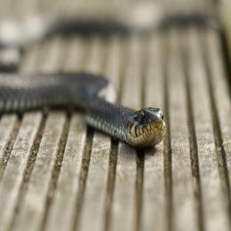 As cobras na medicina e através da história