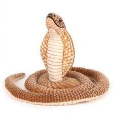 Cobras podem ser origem de infecção de coronavírus