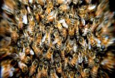 Os insetos e a sua força numérica