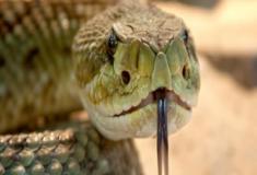 A mortalidade devido a picada de cobras pelo mundo