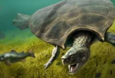 Descobertos fósseis de tartaruga do tamanho de um carro