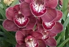 Seis dicas para cuidar bem das suas orquídeas