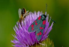 Os insetos e sua incrível adaptabilidade