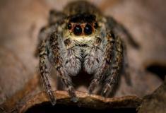 Quais as diferenças entre os aracnídeos e os insetos?