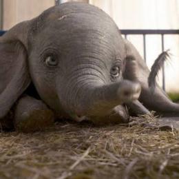 Sessão pipoca: Dumbo