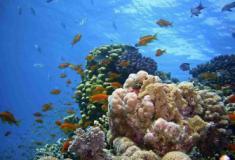 Quase todos os recifes de coral morrerão nos próximos 20 anos
