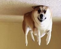 10 fatos fascinantes sobre cães