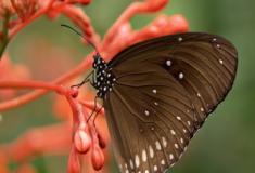 Os insetos foram os primeiros animais a desenvolverem asas