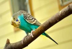 Como verificar a saúde dos seus pássaros?