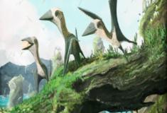 Pterossauros em miniatura?