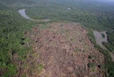 A desflorestação ajuda a transmissão de doenças de animais para seres humanos