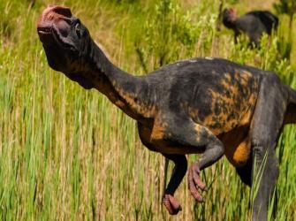Como era a visão dos dinossauros?