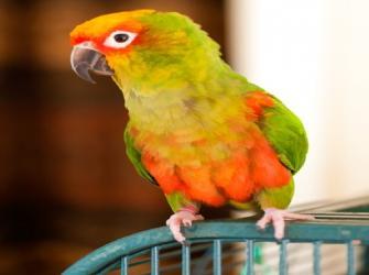 Cuidados que você deve ter com as aves ornamentais: exercícios físicos