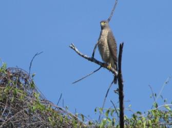 Os habitats das aves de rapina