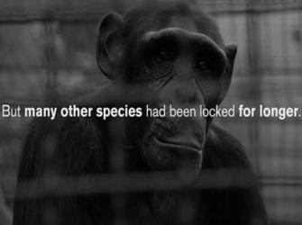 Muitas espécies já vivem em isolamento social