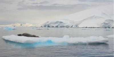 Polo Sul regista temperaturas três vezes superiores à média global dos últimos 30 anos
