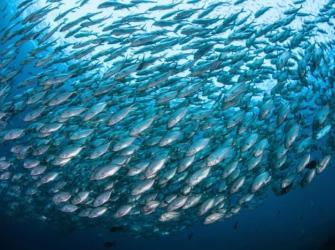 Mudanças climáticas podem extinguir 60% das espécies de peixes