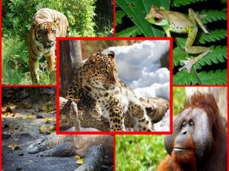 Extinção: o mundo em perigo - zona 5