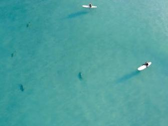 Surfista é cercada por tubarões em praia na Flórida