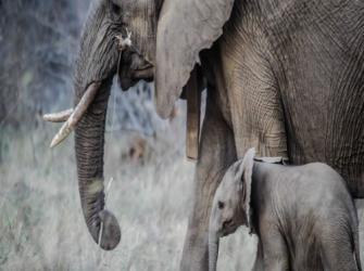 Tamanho é importante no mundo animal?