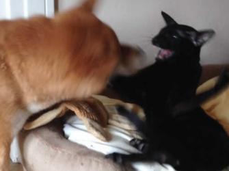 Quando se tem gato e cachorro em casa