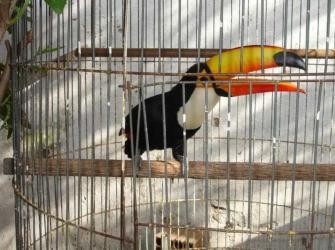 Combater desmate e tráfico de animais seria mais eficaz contra doenças