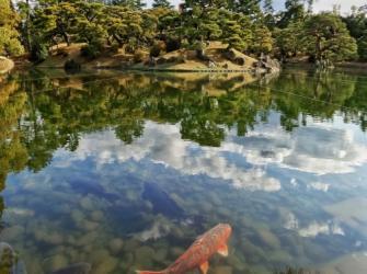 A água e o mundo sensorial dos peixes