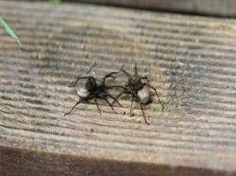 Como é a comunicação e a produção de seda das aranhas?