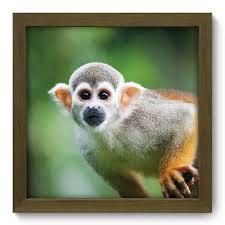 Johnson & Johnson: vacina teve resultado efetivo em macacos
