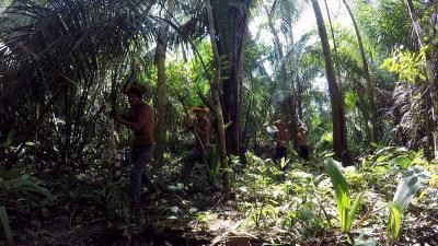Pará lidera desmatamento na Amazônia nos últimos 12 meses; especialistas analisam tendências
