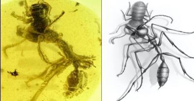Cientistas descobrem 'formigas do inferno' pré-históricas; entenda