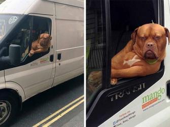 25 Vezes que os cães agiram de forma tão ridícula ao andar de carro