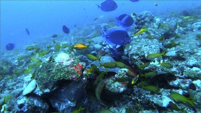 Novos ecossistemas de recifes são mapeados na costa da Bahia