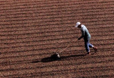Cai o número de pessoas ocupadas na agropecuária, afirma Cepea