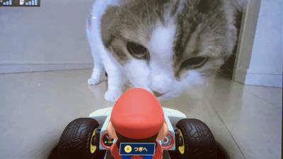 Nintendo lança Mario Kart com Realidade Aumentada e esquece de avisar os gatos