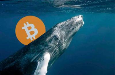 Baleias vão continuar mantendo alta do Bitcoin, revela relatório