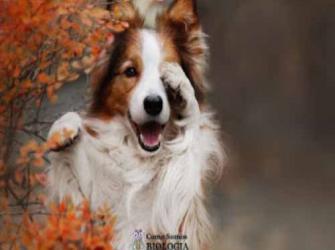 10 doenças que cachorros podem detectar