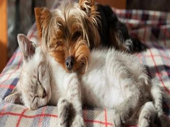 12 Doenças mais comuns em cães e gatos que você precisa conhecer